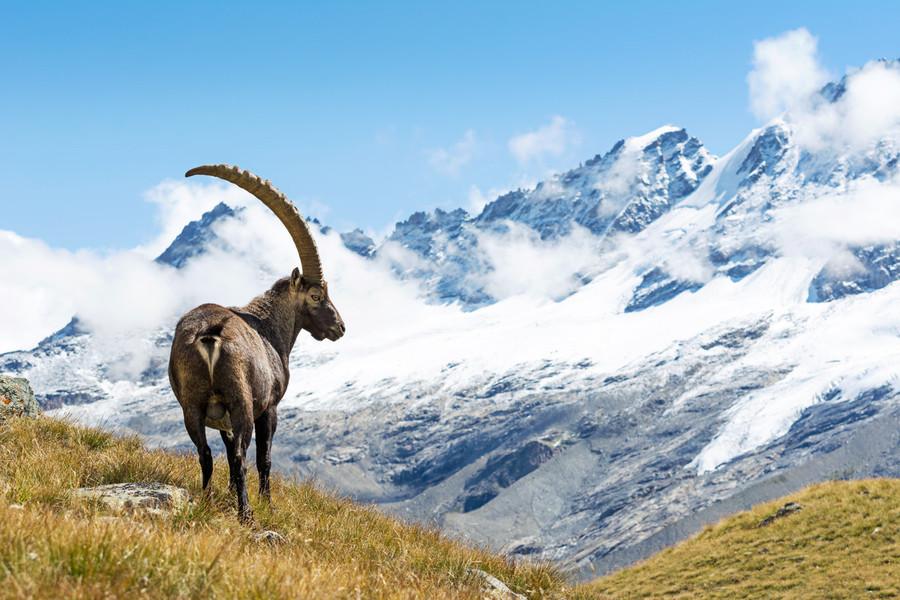 Turismo - Il Parco nazionale del Gran Paradiso per la terza volta consecutiva entra nella Green list